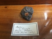 Amber with Goethite from Ukraine, BM.96943, ex. Born collection
